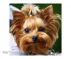 Груминг собак с возможным выездом к Вам домой !